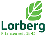 Lorberg